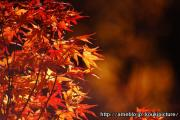 光輝の〜「道」と「癒し」〜写真ブログ
