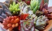 yu Garden&Kitchen