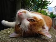 町猫 旅猫 猫は何処にでもいるよ