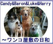 Candy&Baron&Luke&Harry〜4dogs