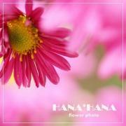 HANA*HANAさんのプロフィール