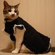 ねこの服やは大いそがし?