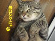 てつだらけ〜ぽっちゃり猫のだらけた毎日〜
