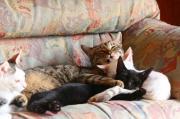 猫だらけの癒しの毎日