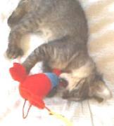 猫カリカリ