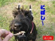 """愛犬""""福之助""""日記"""
