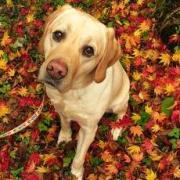 盲導犬エルモの日記