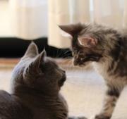 猫と私と時々フェレットさん(旧いたちるどれん)