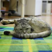 招き猫『ぷ〜』のひとりごと