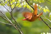 こーすけの鳥撮り