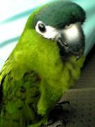 我が家の鳥さん日記