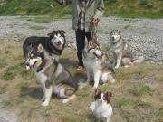 北犬とゆかいな仲間たち