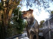 Hunting of Wild Boar Weblog
