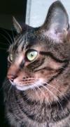 猫 猫 猫 らいふ