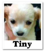 Tiny U・ェ・U toT