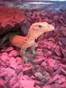〜爬虫類&生物のブログ〜 び〜どら家の生き物達