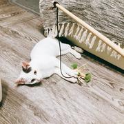 猫と一緒にモノトーン生活