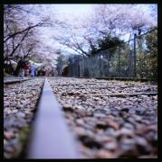 Un appareil-photo et une promenade