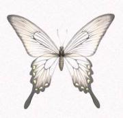 めいめい〜蝶々の手紙