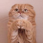 マロンの物語 feat.猫カフェ Cats