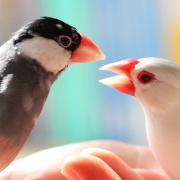 文鳥様と私のEOS