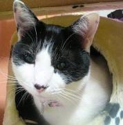 猫の首輪・雑貨・ミサンガのお店  『ベリにゃん工房』