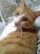 猫ねこの日々-わたしの猫-