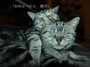 ダメッショ アメッショ 猫記