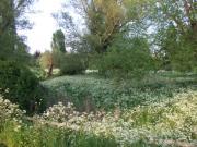 GRASSHOPPER in CAMBRIDGE