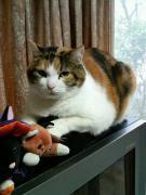 プチマクロビアンの猫セラピー♪はっぴ〜Kitchen♪
