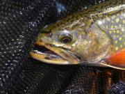 アメリカ シアトル イーストサイド 釣り日誌