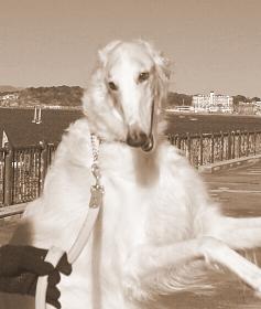 海辺の天使 BORZOI ANERAのブログ