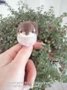 小鳥の羽にいやしをのせて〜小鳥の羊毛フェルト作家