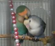 花+鳥+風+月