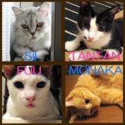 てんやわんやの猫祭り2(旧ニャンコ達の航海日誌)
