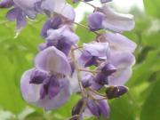 flor(フロル)さんのプロフィール