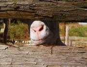 スワラジの裏庭-実践!自給自足田園生活
