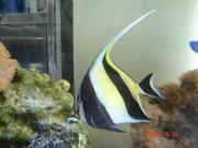 うちの水族館