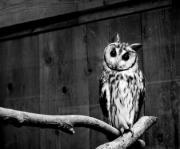 horned_owlの日常