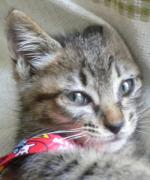 Homeless cat ヤニィの毎日