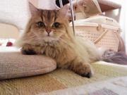 「お猫さま」、ネコはいいよねぇ〜