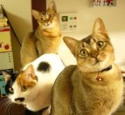 おひげ三毛猫らびとアビビーズの徒然日記