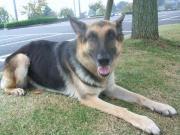 犬の学校の犬の訓練士日記