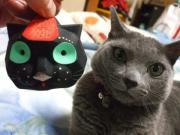 ロシアンブルー@ネコログ、ねころぶ、猫喜ぶ