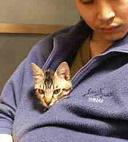 姪太郎日記〜ネコとムスコのいる生活〜