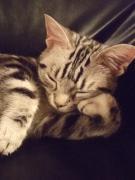うちの猫 ニコ&タマの日記