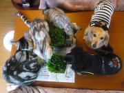 犬猫5匹と二人の田舎生活