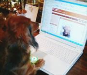 犬式会社 MOMO-癒しとシュールで一息♪-