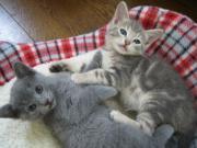 銀次とシェリー  猫のいる暮らし♪