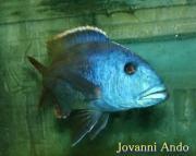 モリオーネ熱帯魚ブログ